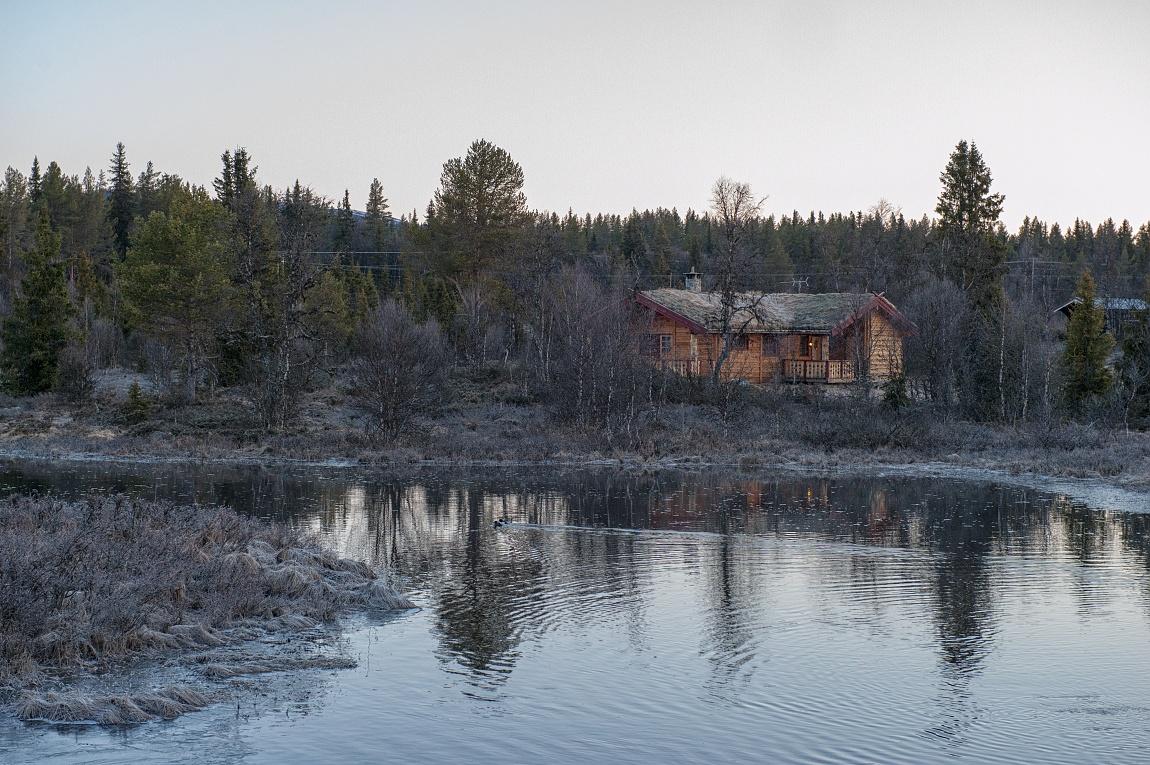 Norská divočina