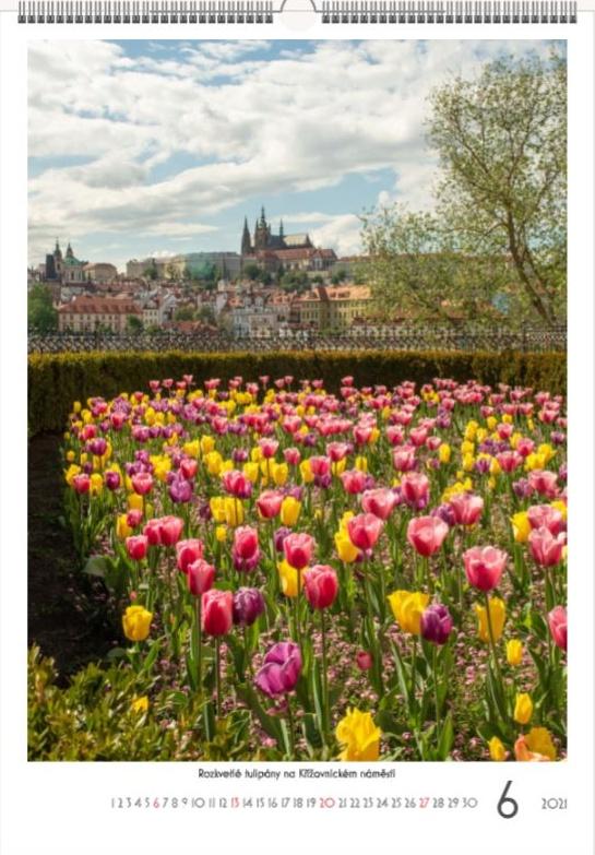 Tulipány v Praze